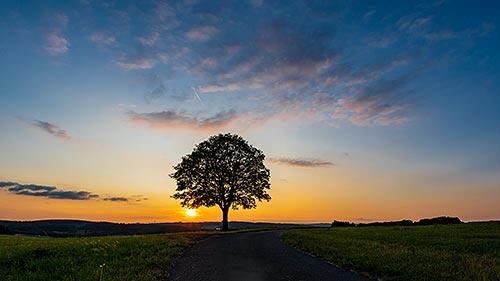Wilgersdorfer Baum - Sonnenuntergang
